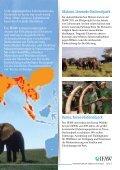 Elefanten und Elfenbein - Seite 5