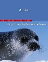 Robben und Robbenjagd in Kanada - International Fund for Animal ...