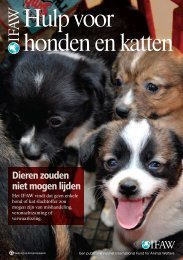 Hulp voor honden en katten - International Fund for Animal Welfare