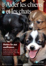 Aider les chiens et les chats - International Fund for Animal Welfare