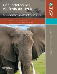 An Indifference to Ivory Japan ivory poll report - International Fund ...