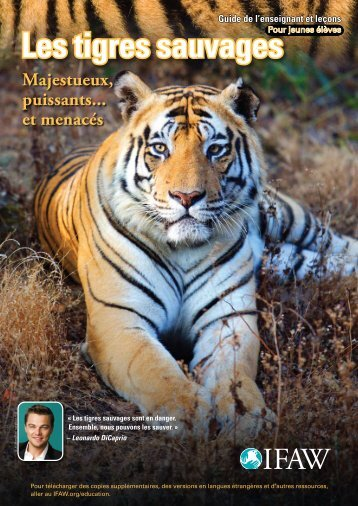 Les tigres sauvages