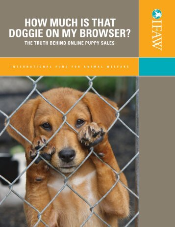 hOW MUch IS  ThAT DOggIE ON My BROWSER? - International ...