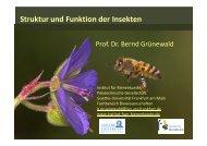 VS-StruFu-Insekten I - Institut für Bienenkunde