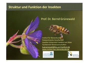 Struktur und Funktion der Insekten - Institut für Bienenkunde