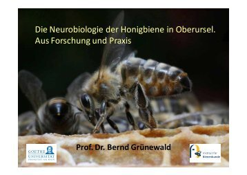 Die Neurobiologie der Honigbiene - Institut für Bienenkunde