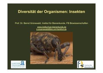 Diversität der Organismen: Insekten - Institut für Bienenkunde