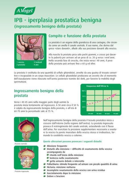 grandezza normale della prostata