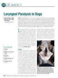 Laryngeal Paralysis in Dogs - VetLearn.com
