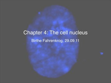 Chapter 4: The cell nucleus