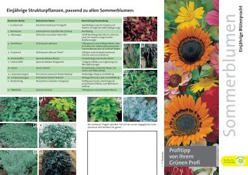 Vorteile von Sommerblumen - Aebi-Kaderli