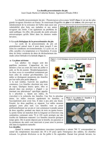 Article de Jean-Claude Martin et Catherine Bonnet - Ville de Saint ...