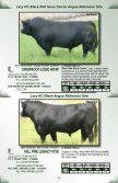 Lazy RC Ranch Bull Sale Lazy RC Ranch Bull Sale - Page 7