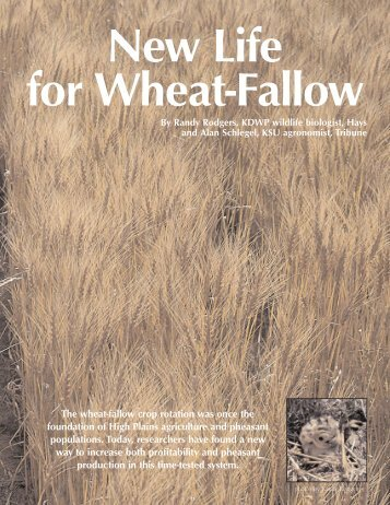 New Life for Wheat Fallow - kdwpt
