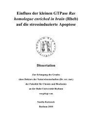 Einfluss der kleinen GTPase Ras homologue enriched in brain (Rheb)