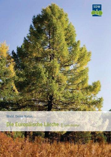 Die Europäische Lärche - Schutzgemeinschaft Deutscher Wald