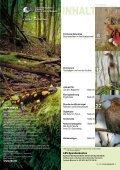 Buchenwälder Kormoran eisvogel Magazin für Arten- und ... - LBV - Seite 3