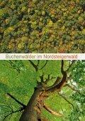 Buchenwälder Kormoran eisvogel Magazin für Arten- und ... - LBV - Seite 7