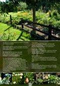 Gärtnern mit Kraut und Seele - Rühlemann's Kräuter & Duftpflanzen - Seite 4