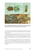 Cortestina Knoflach - Naturhistorisches Museum Bern - Page 3