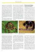 SELTENE SCHLANGEN AUS MADAGASKAR - Seite 4