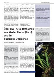 Über zwei neue Orchideen aus Machu Picchu (Peru) aus der ...