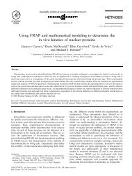 Using FRAP and mathematical modeling to determine the in vivo ...