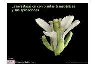 La investigación con plantas transgénicas