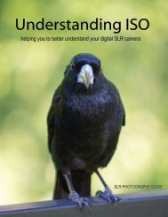 Download Understanding ISO - SLR Photography Guide
