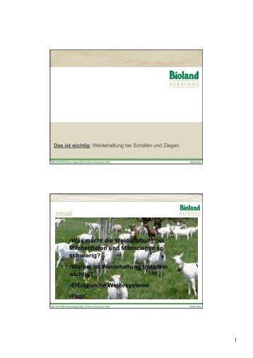 Das ist wichtig Weidehaltung bei Schafen und Ziegen