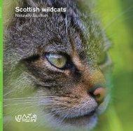 Scottish wildcats - Scottish Natural Heritage