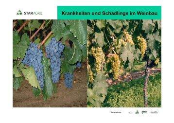 Krankheiten und Schädlinge im Weinbau