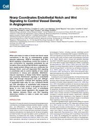Nrarp Coordinates Endothelial Notch and Wnt Signaling to Control ...