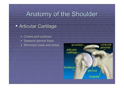 Acute Shoulder Dislocations. - Fisiokinesiterapia.biz