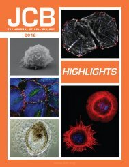 Download PDF - The Journal of Cell Biology - Rockefeller University ...