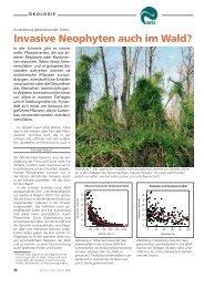 Invasive Neophyten auch im Wald? - WSL