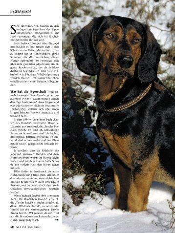 UNSERE HUNDE - Wild und Hund