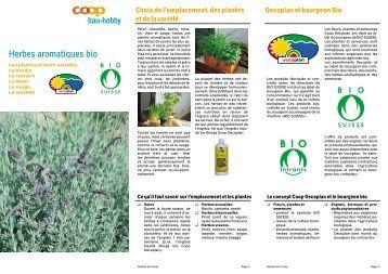 Herbes aromatiques bio - LAB-Immo