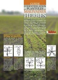 Guide d'identification des plantules de mauvaises herbes