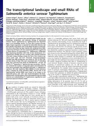 The transcriptional landscape and small RNAs of Salmonella ...
