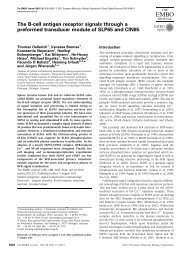 The B-cell antigen receptor signals through a preformed transducer ...