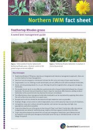 Feathertop Rhodes grass - Department of Primary Industries