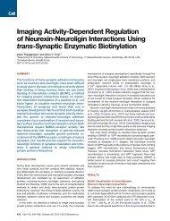 Neurexin-Neuroligin Interactions Using trans-Synaptic Enzymatic ...