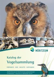 Katalog der Vogelsammlung - Müritzeum