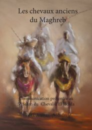 Les chevaux anciens du Maghreb