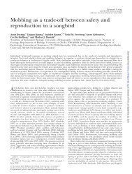 Mobbing as a trade-off between safety and reproduction in a songbird