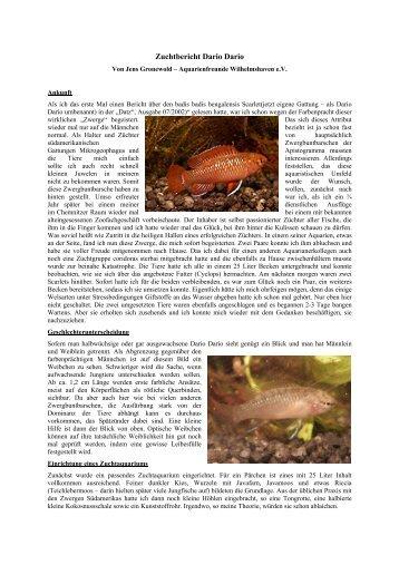 Zuchtbericht Dario Dario - Aquarienfreunde Wilhelmshaven