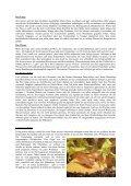 Zuchtbericht Dario Dario - Aquarienfreunde Wilhelmshaven - Seite 2