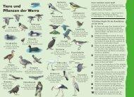 Tiere und Pflanzen der Werra