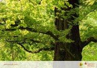 Jahresbericht 2010 - Sparkasse Nürnberg
